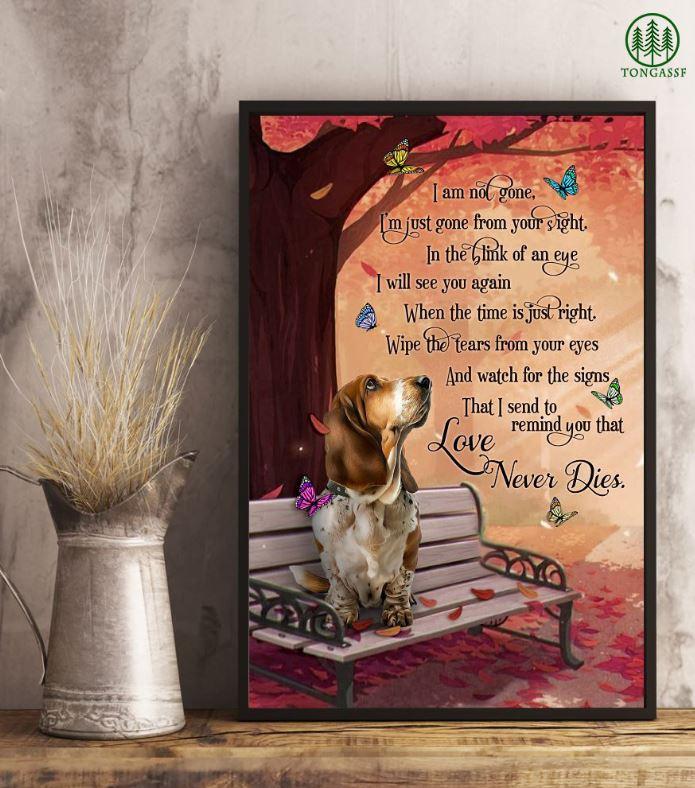 Basset Hound dog sitting on bench poster